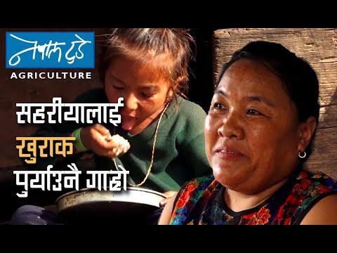 सहरीयालाई खुराक पुर्याउनै गाह्रो [ The Nepal today ] Agriculture in Nepal