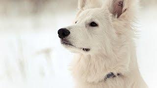 СОБАКА В ДОМЕ: как НАЛАДИТЬ КОНТАКТ с собакой?  | ч.6.