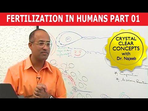Fertilization in Humans 1/8