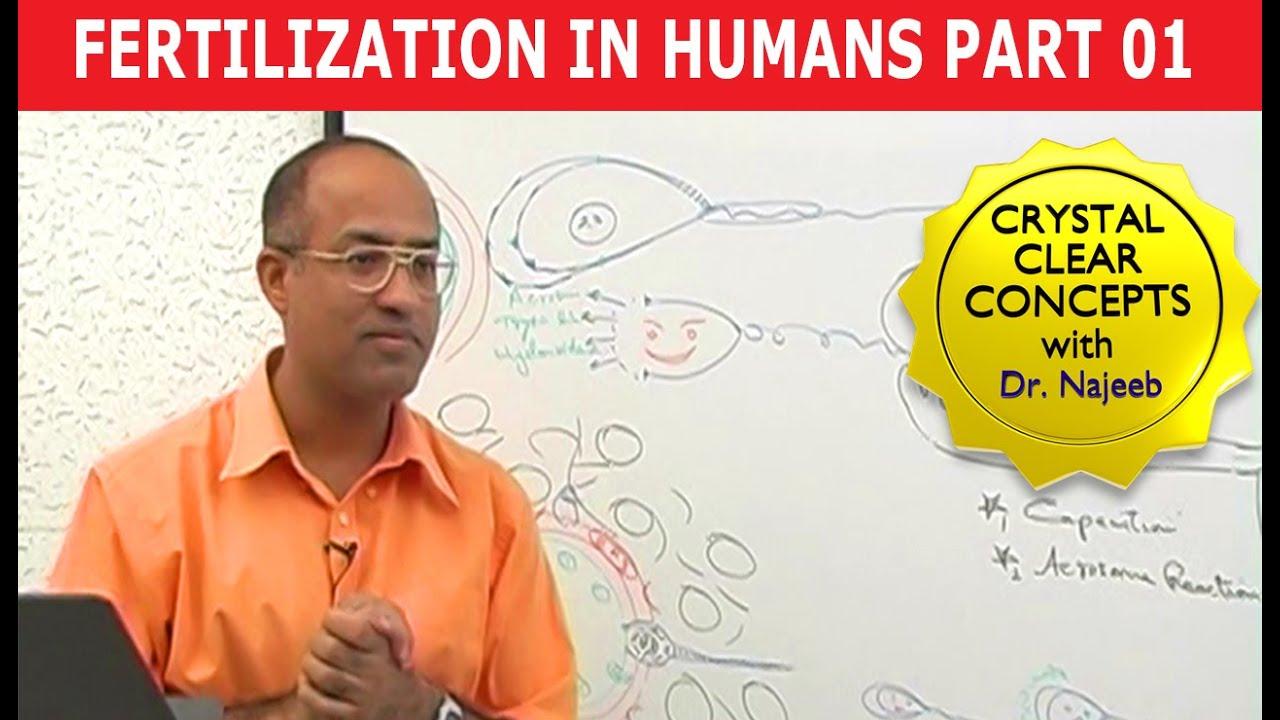Fertilization In Humans 18 Youtube