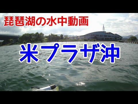 【琵琶湖の水中動画】米プラザ沖 濁りを修正しましたが見辛いです