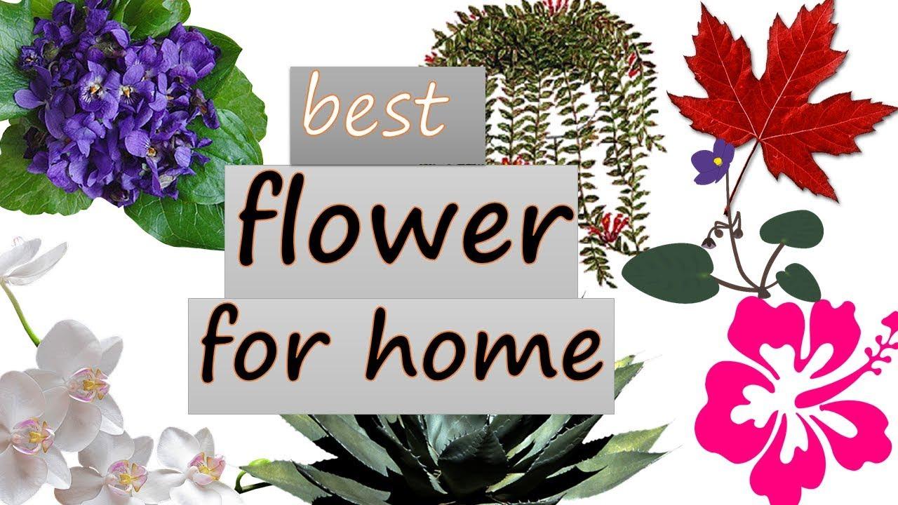 Pretty indoor flowering plants top bakchod youtube pretty indoor flowering plants top bakchod mightylinksfo