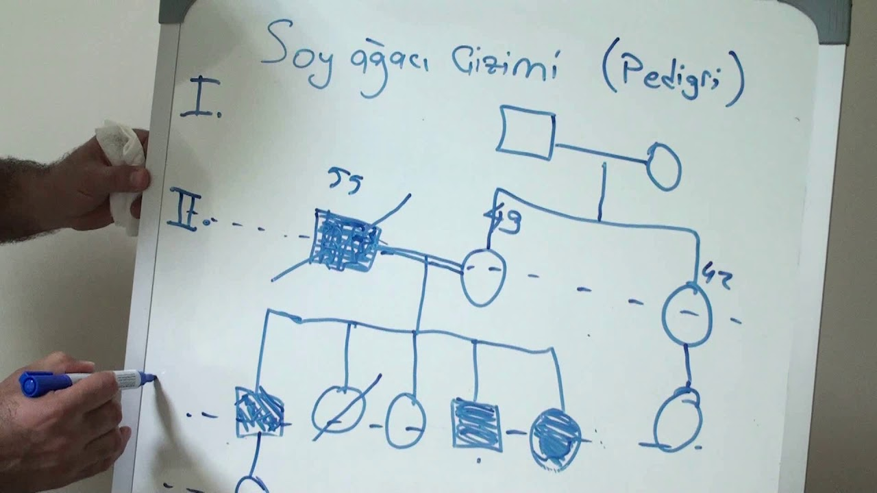 Aile Soy Ağacı çizimi Youtube
