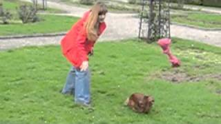 Dog Obedience Exercise With My Dachshund