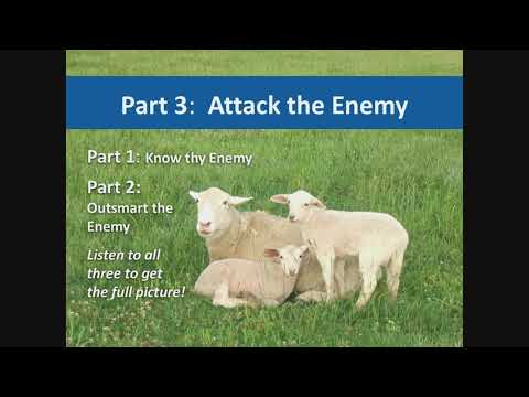 Managing Internal Parasites In Sheep And Goats: Attack The Enemy