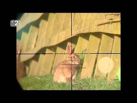 Slow Motion Airgun Rabbit Hunting #18
