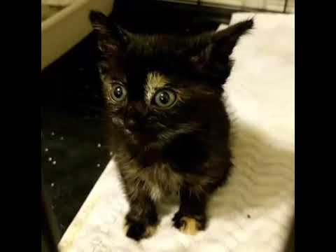 Kitten Gets Her Meow Back After Rescue