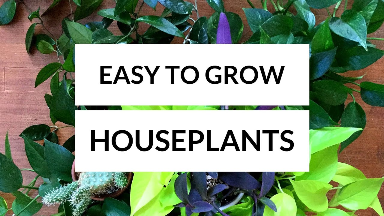 Easy to grow houseplants youtube for Easy to grow houseplants