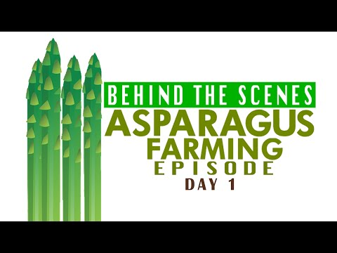 Behind the Scenes  AgriBusiness Asparagus Day 1