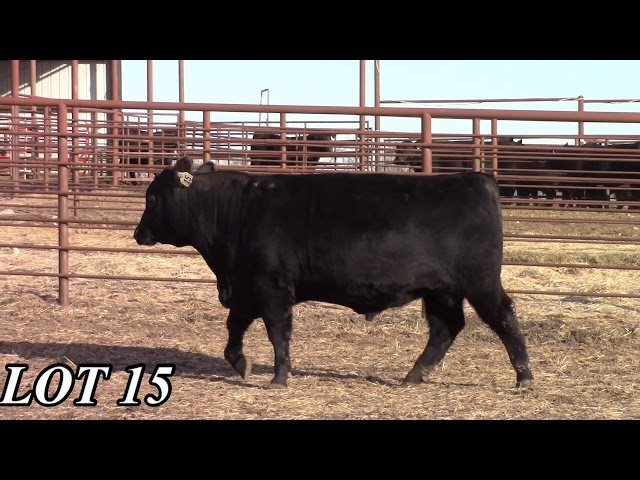 Mead Angus Farms Lot 15