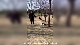Японские боевые коты