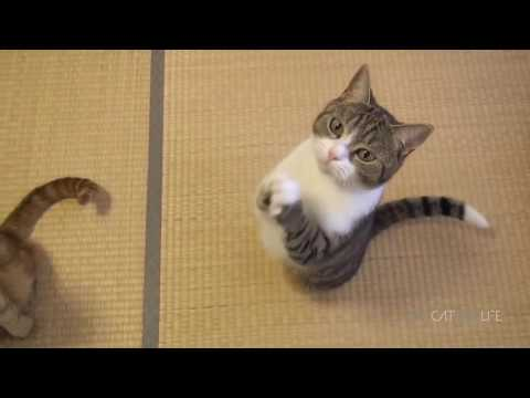 funny cats that make you laugh out loud