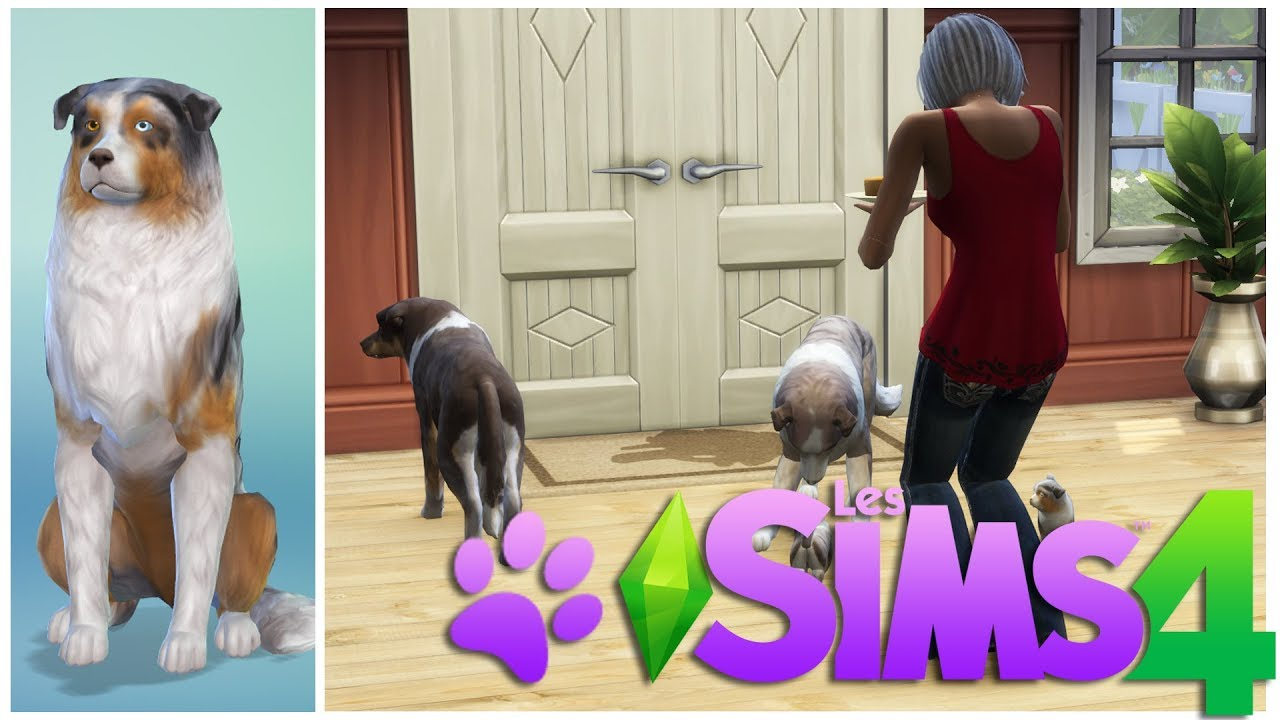 Sims 4 chien et chat bebe