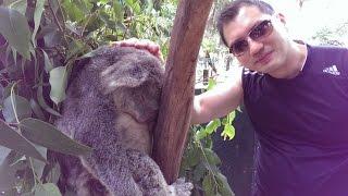 2 mins Fun Video of furry animals @ Koala Park Sydney