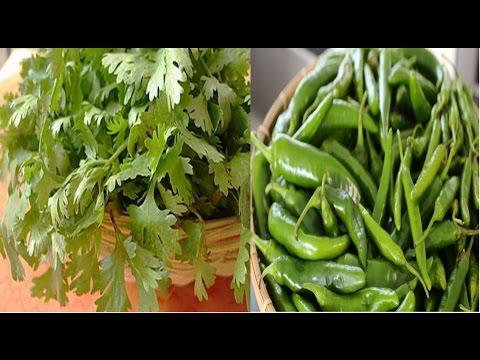 2 महीने तक हरे धनिये और हरी मिर्च इस तरह करें स्टोर | How to store green chilly and green coriander