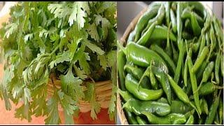 2 महीने तक हरे धनिये और हरी मिर्च इस तरह करें स्टोर   How to store green chilly and green coriander
