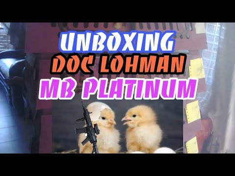 Download DOC PLATINUM   Unboxing doc Lohman favorit para peternak