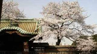 The Bartered Bride Overture, Ueno Park Cherry Blossoms