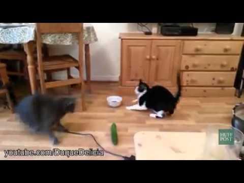 katzen haben angst vor gurken youtube