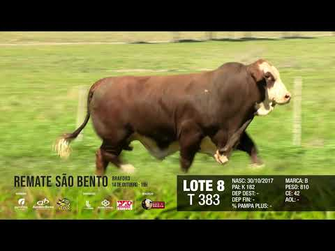 LOTE 08 T 383