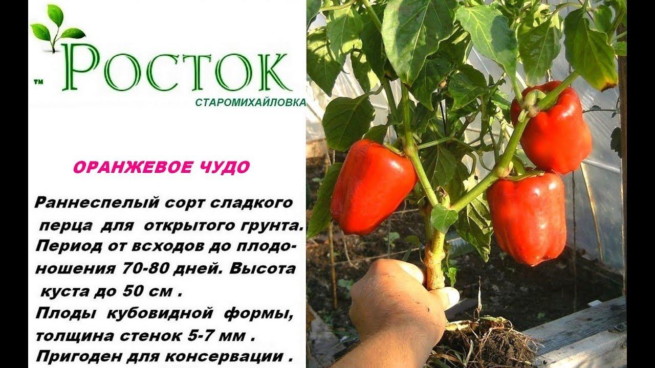семена помидор оранжевое чудо