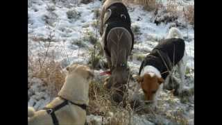 Hundefreundschaft ***weimaraner Und Jack Russel***
