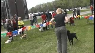 Animatch - Dog Training Lessons