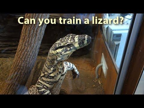 Can you train a lizard?
