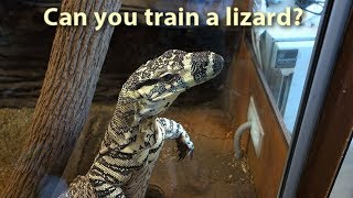 Can you train a lizard?