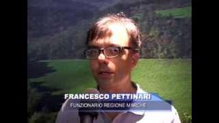 Francesco Pettinari, Funzionario Regione Marche