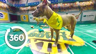 Pup's Eye View: First Half | Puppy Bowl (360 Video)