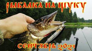 Ловля щуки на спиннинг в сентябре 2021 Рыбалка на щуку Ловля щуки на воблеры и джиг