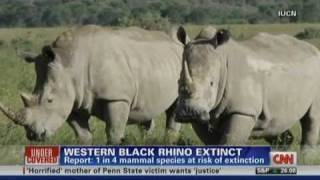 Canary in the Coal Mine - Western Black Rhino Now Officially Extinct in the Wild IUCN