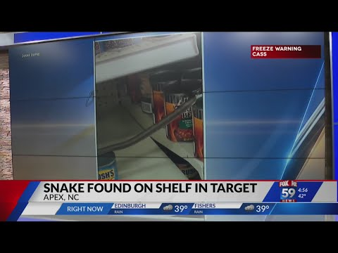 Snake-found-on-the-shelf-of-a-North-Carolina-Target-store