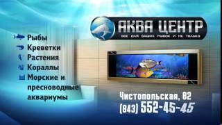 видео Купить тумбы под аквариум в интернет-магазине с доставкой по России