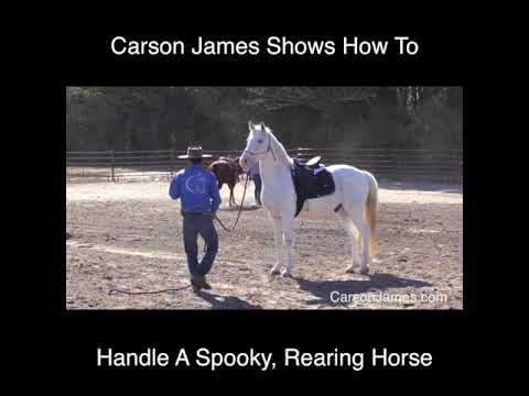 How To Handle A Spooky Horse