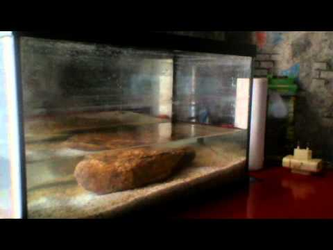 comment faire un aquarium 20 litre youtube. Black Bedroom Furniture Sets. Home Design Ideas