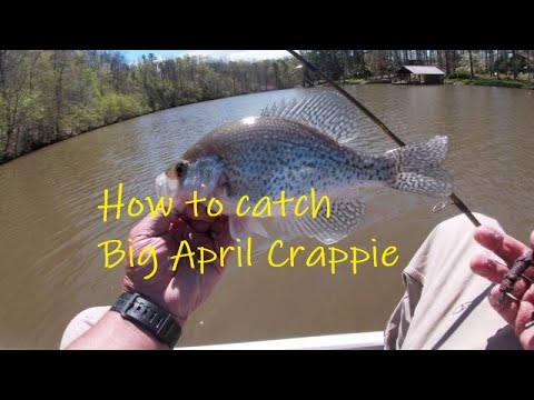How To Catch Big April Crappies/Tips,Locations,and Lures To Catch Crappie/Crappie Fishing In April