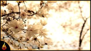 Beautiful Relaxing Music | White Petals | Beautiful Instrumental Piano