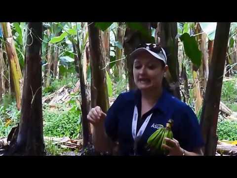Limon Costa Rica Video