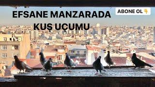 Güvercin Kümes Ziyareti Abi Kardeşin Güvercin Sevdası - İSTANBUL BAĞCILAR OYUN KUŞU GÜVERCİN