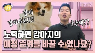 Can effort change my dog's favorites?|Kang Hyong Wook's Q&A