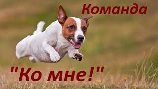Команда Ко мне. Как подозвать собаку, Если собака не подходит по команде / Come! If dog doesn't come