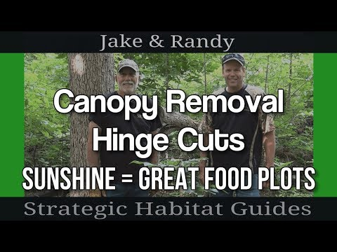 Hinge Cutting for deer habitat:  Canopy removal tips