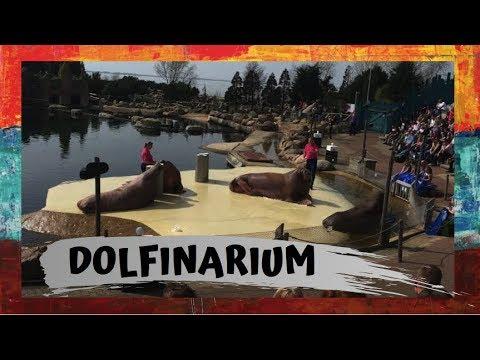 dolfinarium:-the-dutch-version-of-seaworld-pt2- -filipino-dutch-family