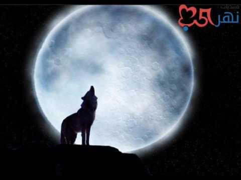 صوت عواء الذئب Sound Of Wolf Youtube