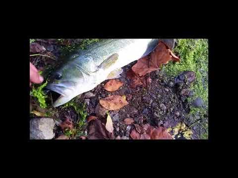 2 Nice Largemouth Bass - Pompton Lake & River Fishing 9-28-2017