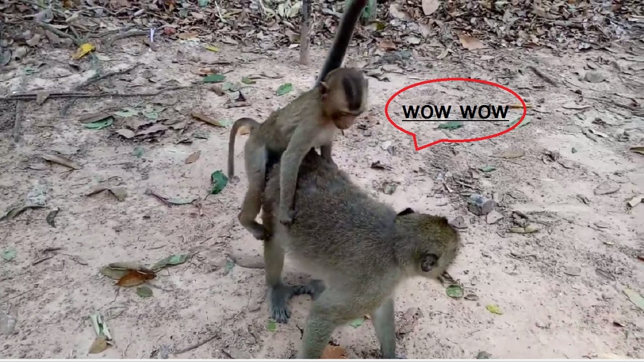 eroctic monkey