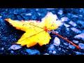 Группа Трэк - Нарисуй мне осень   ( Антон Бизеев )