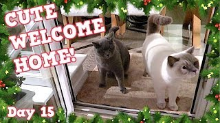 CUTE WELCOME HOME FROM CATS AFTER HOLIDAY!   VLOGMAS DAY 15 - CHRIS & EVE